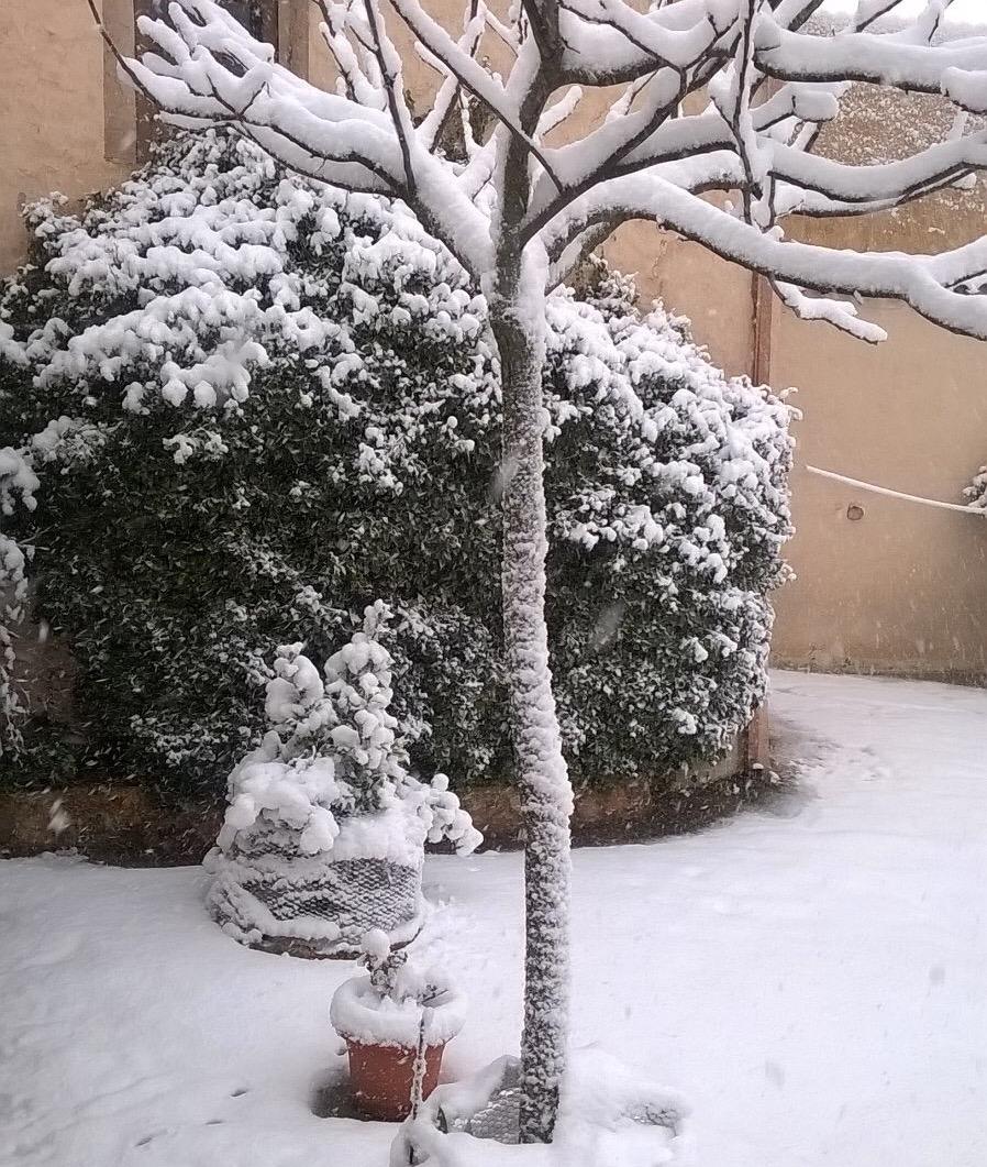 En viveros hay nieve hasta para hacer mu ecos for Viveros en lima
