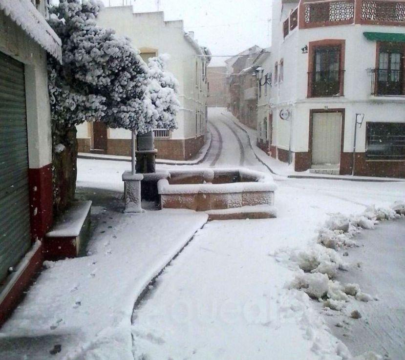 En viveros hay nieve hasta para hacer mu ecos for Viveros albacete